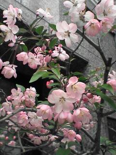 春めいてるね